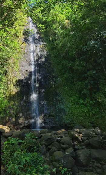 Manoa Falls Beauty In Nature Day Forest Green Color Growth Motion Nature No People Outdoors Plant Scenics Tree Water Waterfall