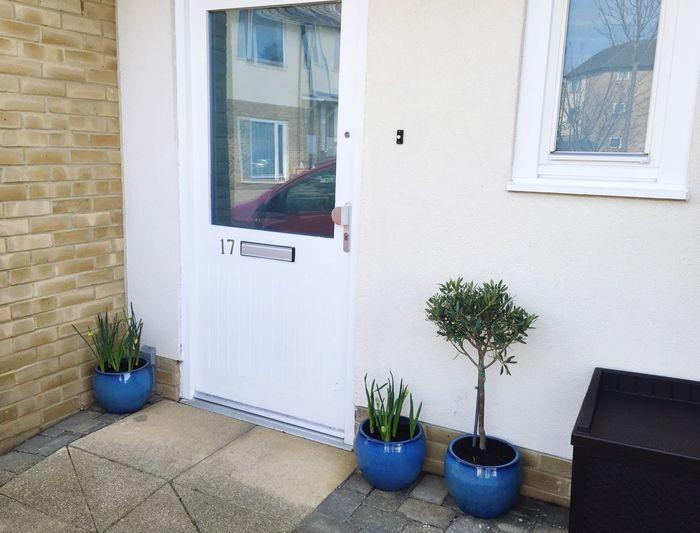House Home Olive Tree Daffodils