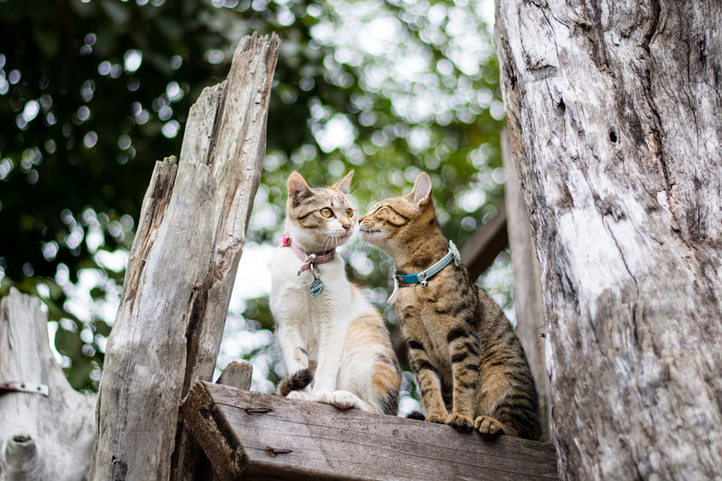 Cats sitting on tree trunk