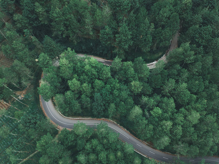 High Angle View Of Road Amidst Trees At Forest