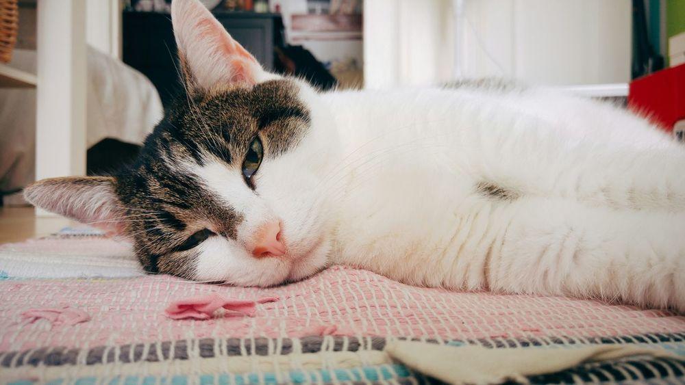 Cat Catcontent Cats Of EyeEm Pet Photography  Schlumpelkater