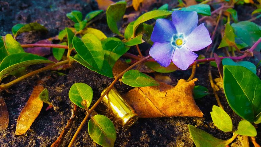Flower Nowar Nopeople Gunsnroses Streetphotography Urbanphotography Outdoors Outside Urban Day Near Macro_collection Macro Plants Plant Road Street Bullet Bullets Peace After War New Beginnings
