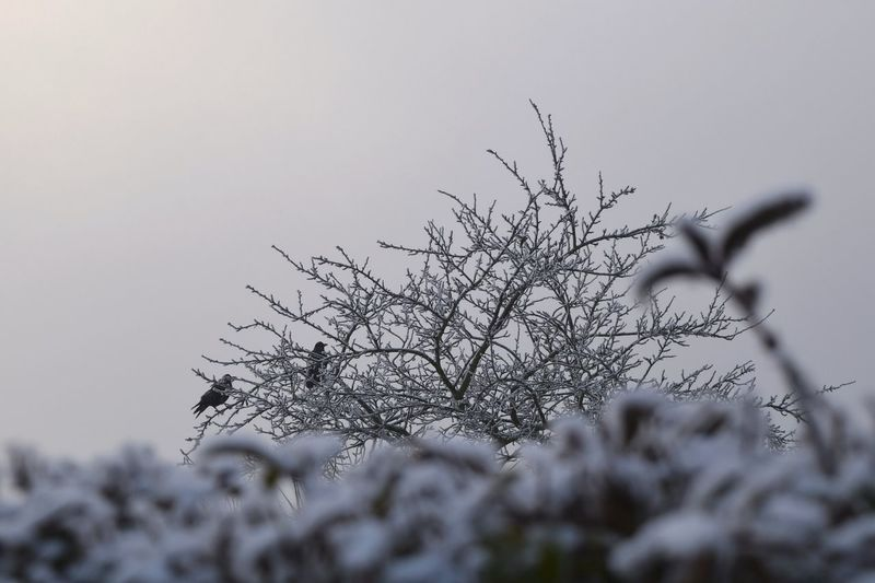 Nature Winter Outdoors Sky Beauty In Nature Crows Bokeh Autumn 2016 December 2016 Tree How's The Weather Today It Is Cold Outside Showcase December How's The Weather Today? The Places ı've Been Today Winter Is Coming... First Touch Of Winter TreePorn Cold Outside ❄⛄  Silhouette Snowflakes Weather Beauty In Nature Cold Temperature Falling Snowwwwwww ❄❄❄❄❄❄❄❄❄❄❄❄❄