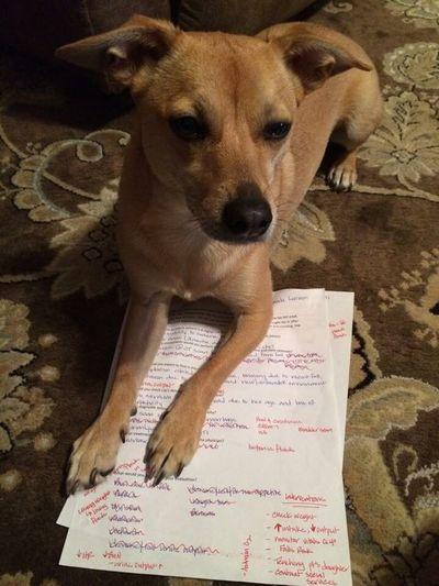 Studying NoStudies