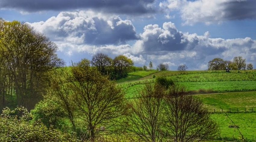 Beauty In Nature Cloud - Sky Day Field Grass Green Color Landscape Nature No People Outdoors Rural Scene Scenics Sky Tree