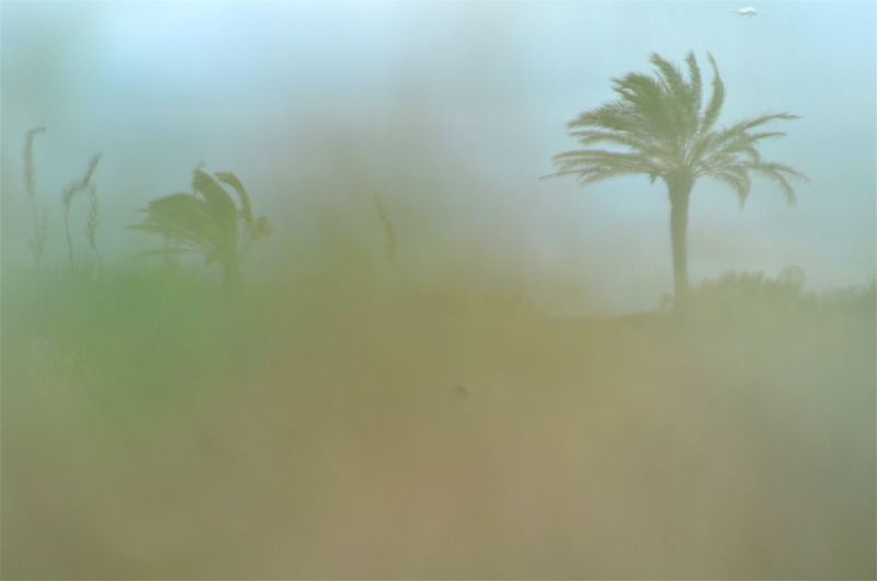 From My Point Of View Eye4photography  EyeEm Nature Lover On The Beach Palm Tree Plant Nature No People Tropical Climate Growth Tree Sky Textured  Outdoors Beauty In Nature Textured Effect