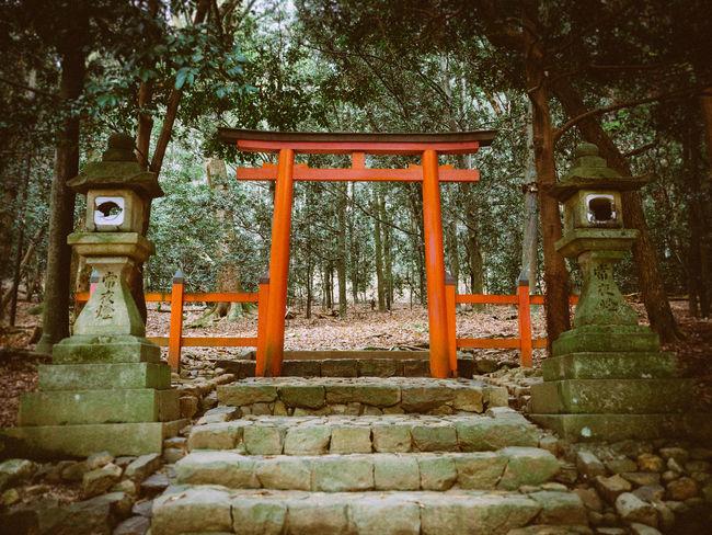 Torii at Nara Red Stairs TORII Torii Gate Torii Gates Tranquility