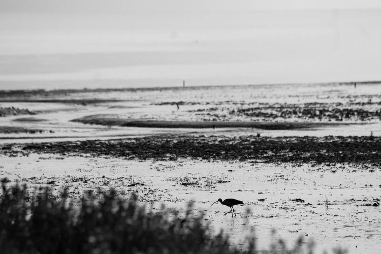 Animal Themes Beach Beauty In Nature Bird Day Horizon Over Water Low Tide Nature No People Outdoors Sand Scenics Sea Sky Tranquil Scene Tranquility Water Wave