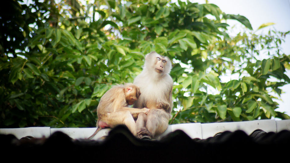 Care Monkeys Animal Themes Animal Wildlife Animals In The Wild Cover Day Mammal Monkey Nature No People Outdoors Sitting Togetherness Tree Pet Portraits