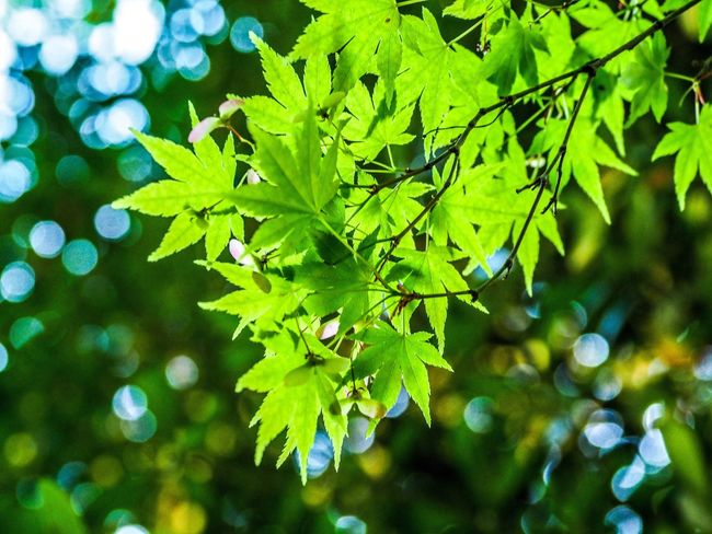 Leaf Green Color Nature Beauty In Nature Outdoors Plant Fineday Enjoying Life Landscape Hello World Today's Hot Look EyeEm Best Shots Holiday Nature Beauty In Nature Tree Close-up Enjoy Life