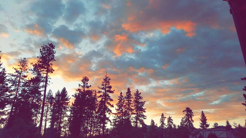 Big Bear Mountain Sky Forest Nature Beauty In Nature Cloud - Sky Outdoors Tree Area