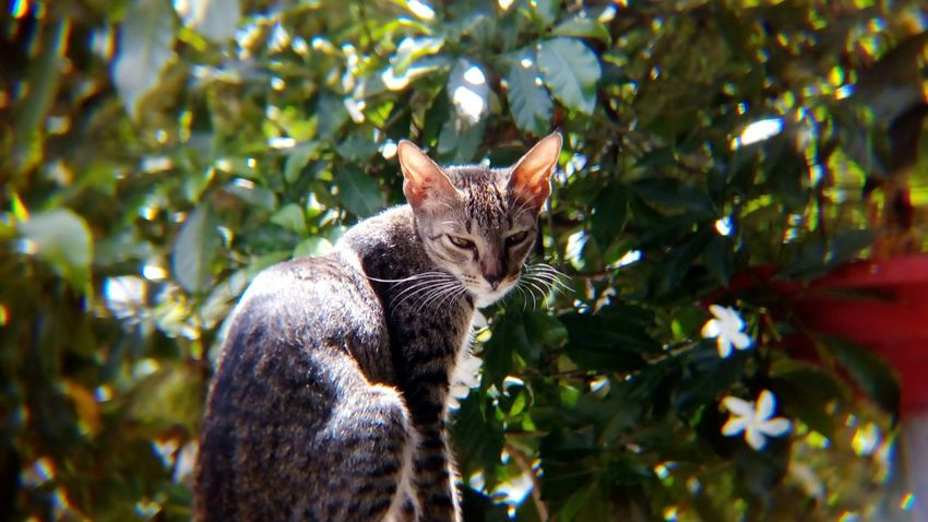 EyeEm Selects One Animal Tree Mammal No People Day Nature Feline Pets Outdoors Animal Themes Close-up Shot With Mobile Clip Lens Animal Cat Domestic Cat Domestic Animals Backgrounds Freshness Looking At Camera Cute Tree Branch Pet Portraits