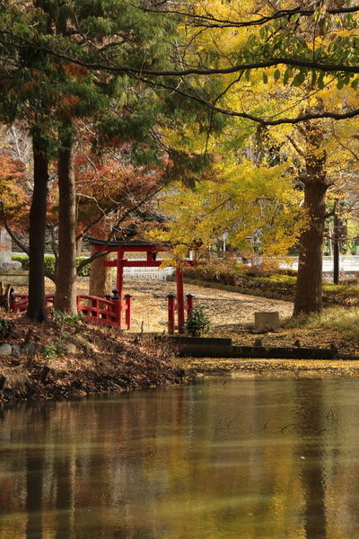 Tree Water Waterfront No People Tree Trunk Outdoors Nature Pond Autumn Autumn colors Japan