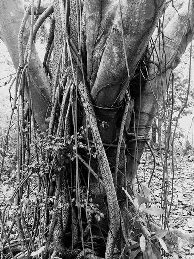 Black & White Different Perspective EyemPuertoRico NoPeopleAround EyeEm Nature Lover
