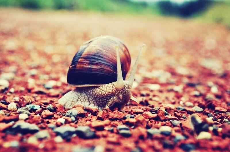 taken in Turkey. Snail Hunting