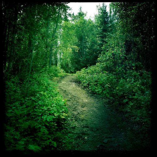Forest NEM Landscapes Canada