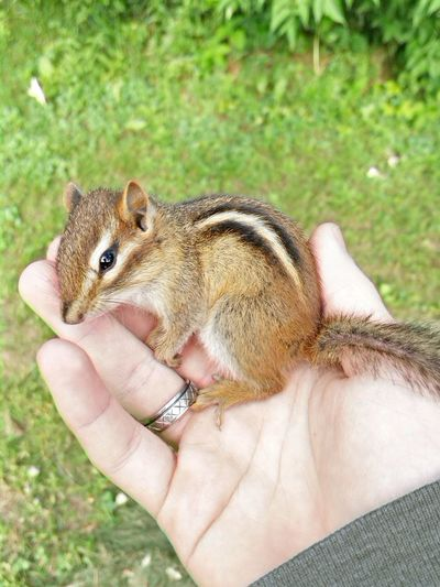 Cute Chipmunk Nature Aww