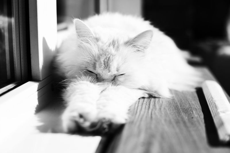 Animal Animal Themes Cat Domestic Domestic Animals Domestic Cat Eyes Closed  Feline Indoors  Lying Down Mammal No People One Animal Pets Relaxation Resting Selective Focus Sleeping Table Vertebrate Whisker
