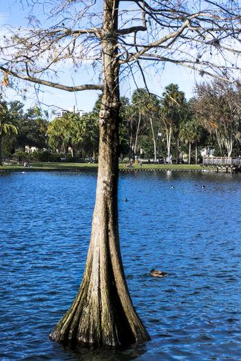 Lake Eola At Lake Eola Park Orlando Florida GayneGirlPhotography Nature The City Beautiful Florida Beauty In Nature Nature Photography