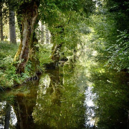 Le reflet de la #nature #instameetmarais2013 #niort #igersniort #igersfrance Igersniort Reflectionstory Reflection Exks_reflection Nature Puddle_warfare Niort Rsa_reflection_shotz Puddlegram Reflection_fun Igersfrance A_reflection_in_time Reflection_shotz Reflect_puddles Worldplaces Instameetmarais2013 Tree_captures Water_sunsets World_shotz Worldcaptures World_captures Water_captures World_specialist Reflection_perfection