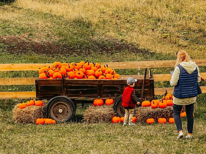 View of various pumpkins on field