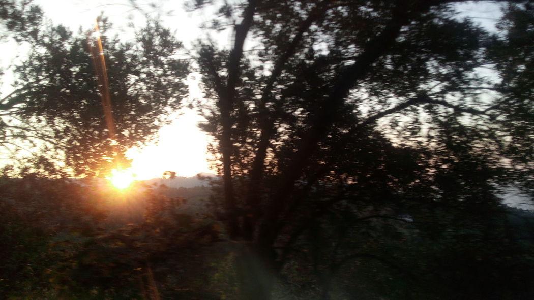 Akçaabat Nature