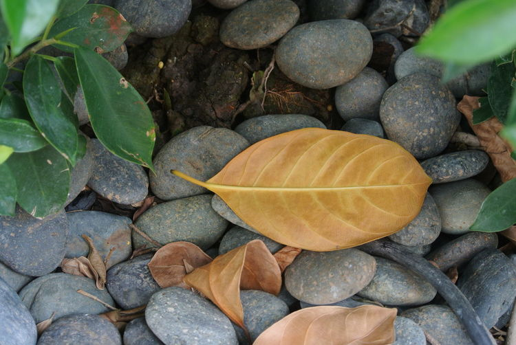 yellow leaf and
