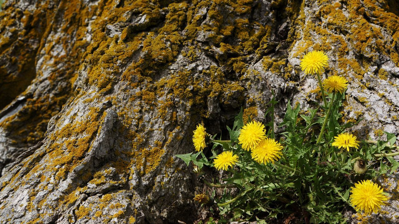 Close-Up Of Yellow Flowers On Tree Trunk