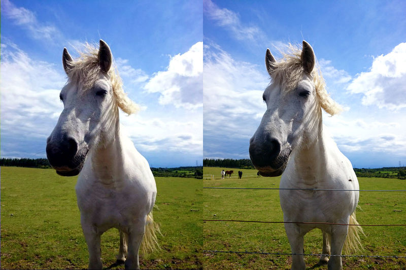"""Example 2 of my """"proper"""" editing. Lola in her field. Original photo on the right of course. Animal Animal Themes Animals Cloud - Sky Editing Editing Photos Editing Pictures Eye Em Scotland Field Grass Grassy Green Horse Horse Photography  Horses Horsesofinstagram Landscape My Edit My Editing  My Edits Nature Scotland Sky Uk White"""