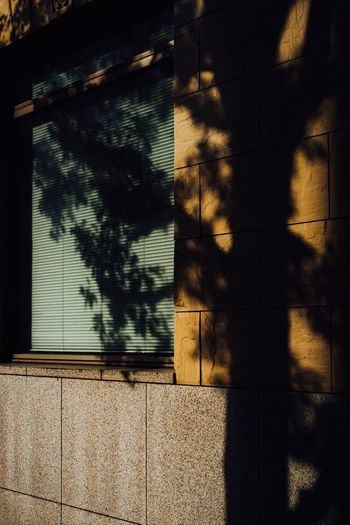 Wall. Shadow Built Structure Sunlight Architecture Building Exterior Nature Window No People Day Wall - Building Feature Building Outdoors Plant Textured  Tree Full Frame Wall