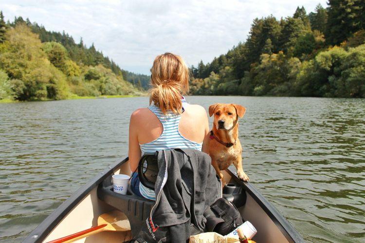 Canoe Russian River River Camping Corgimix Holiday Norcal California Travel Dog