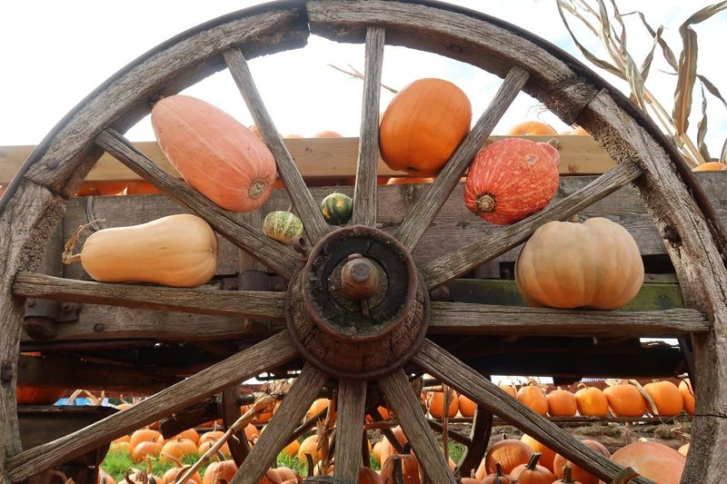 Pumpkin wheel Wheel Pumpkin Kürbis Halloween Food And Drink Food Freshness No People Healthy Eating Day Fruit Wellbeing Outdoors Still Life Vegetable Pumpkin Container Metal Orange Color Pattern Nature Large Group Of Objects Sky Decoration