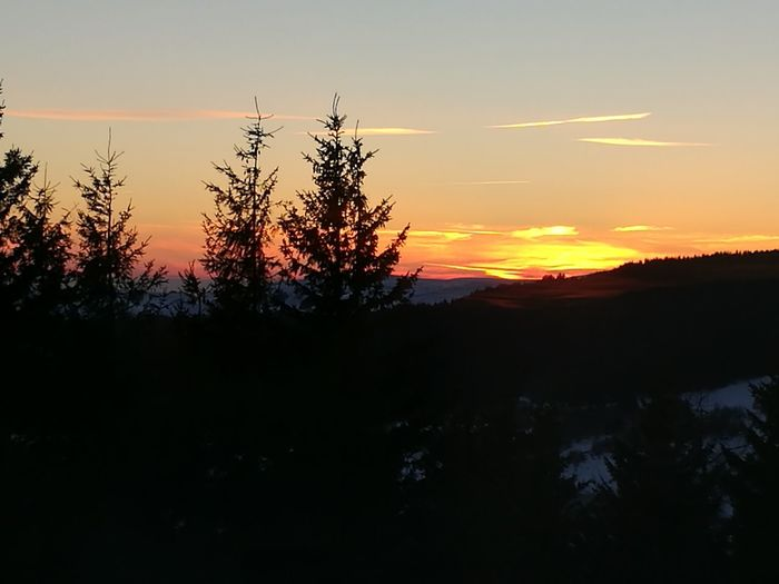 The Week Of Eyeem Montagne Super Besse Sunset Tree Landscape Social Issues Nature Beauty In Nature Pine Woodland Forest Igniting Outdoors Beauty Scenics Vacations Mountain Sky No People