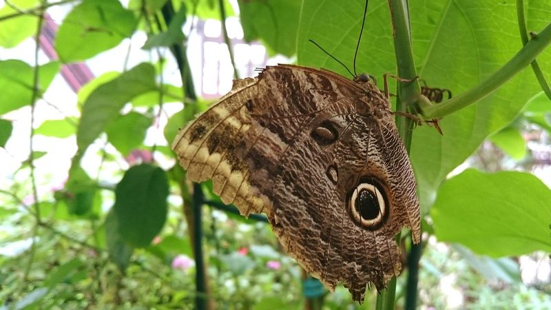 Butterfly ❤ Butterfly Butterflies BORBOLETA Borboletas Butterfly Collection Bugs Bugslife Insects  Insetos