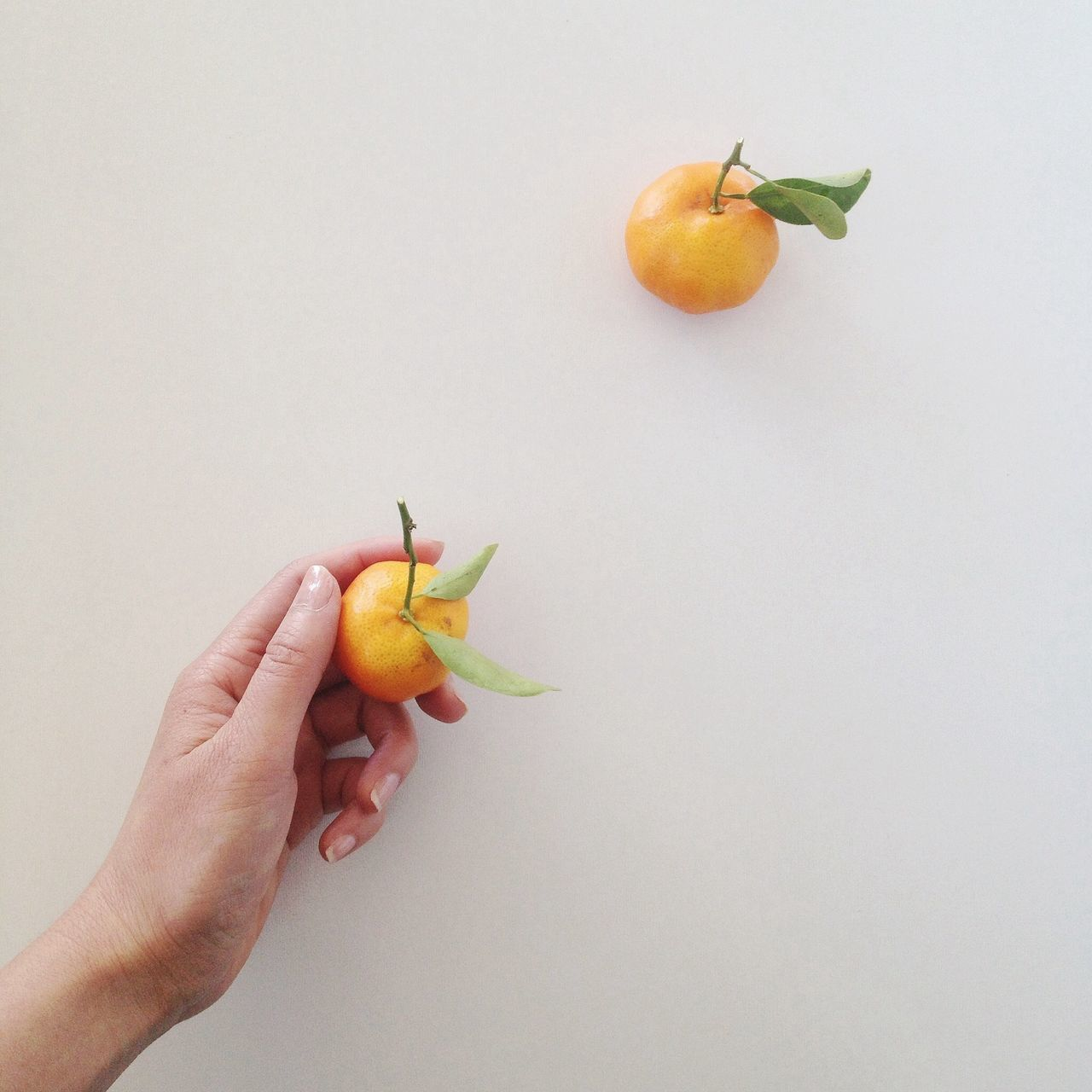 Close-up of hand holding fruit over white background