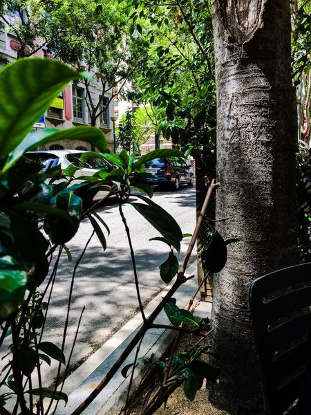 Carrer dels Angels. Green Nature Savetheplanet Ilovebarcelona Mycity Picoftheday Relaxing Feeling Good