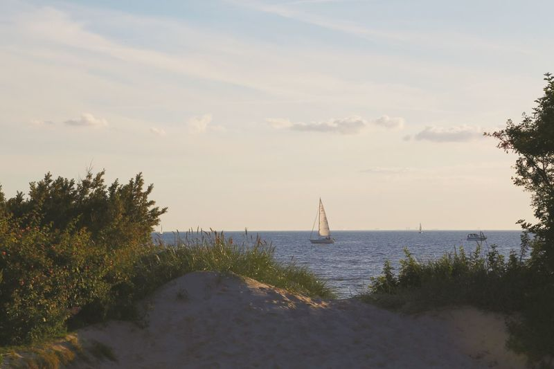 Tree Sky Sea Water Sailboat Nature Tranquility Sailing Scenics Nautical Vessel Beauty In Nature Tranquil Scene Cloud - Sky Outdoors No People Day Horizon Over Water Ship Beach Full Length Summer Full Frame Waterfront Sailing Boat Boat
