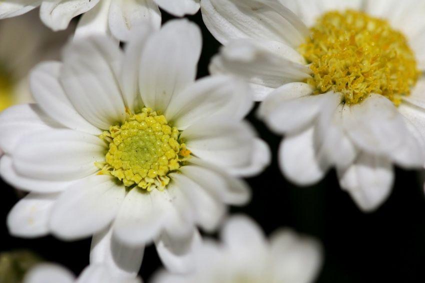 Flowers Macro 100mm Belleza Natural sembrando en el jardín