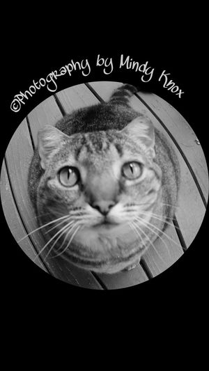 Fisheyephoto Fisheye MyBabyGirl  Kats Cats Catslife Cats Lovers  Catsoftheworld Live Love Laugh BeCreative Blackandwhite Photography Bigisland Bigislandlove Bigislandhawaii Hanging Out Black And White Photography Black & White PhotographyHi! Enjoying Life Relaxing NatureAtItsBest Godscreation Godsgifts