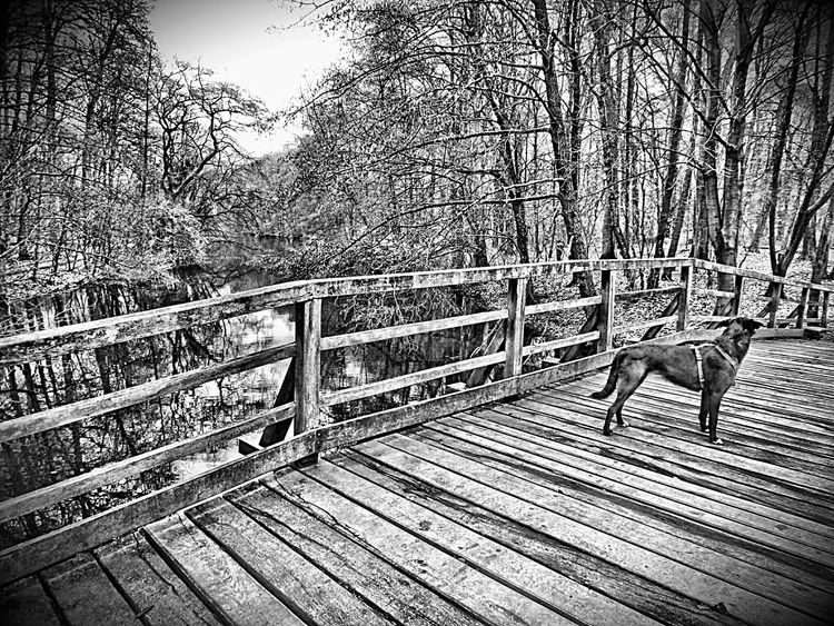 Frankfurt Am Main Stadtwald  Cityforest Winter Trees Hdrphotography Hdr_edits Dogslife Dog Walking Forrest Lake Walking In The Woods No People Lakeview Forrest Photography Bridges Beauty Of Nature Nature Photography Blackandwhite Photography Showcase: February Pets Nature_collection Nature Is Art Peace And Tranquility Peaceful Moment Water Reflections Hdr Edit