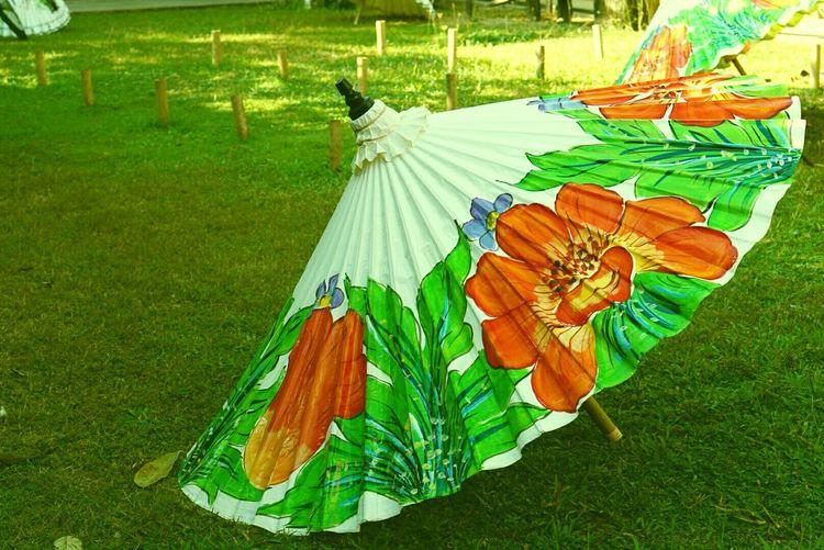 Grass Green Color Field Outdoors Umbrella Traditional Art Big Umbrella Thai Umbrella Thai Art Chiangmai Thailand Bauetiful Umbrella