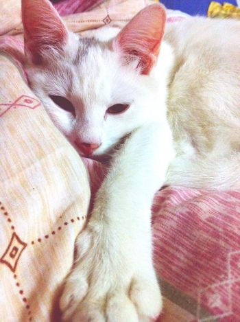 EyeEm Animal Lover Cute Pets My Cat Softkittywarmkitty Taking Photos Cat Lovers