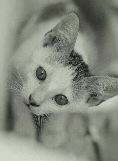 ci luk baaaaa Animals Taking Photos Macro Me O My O Cat