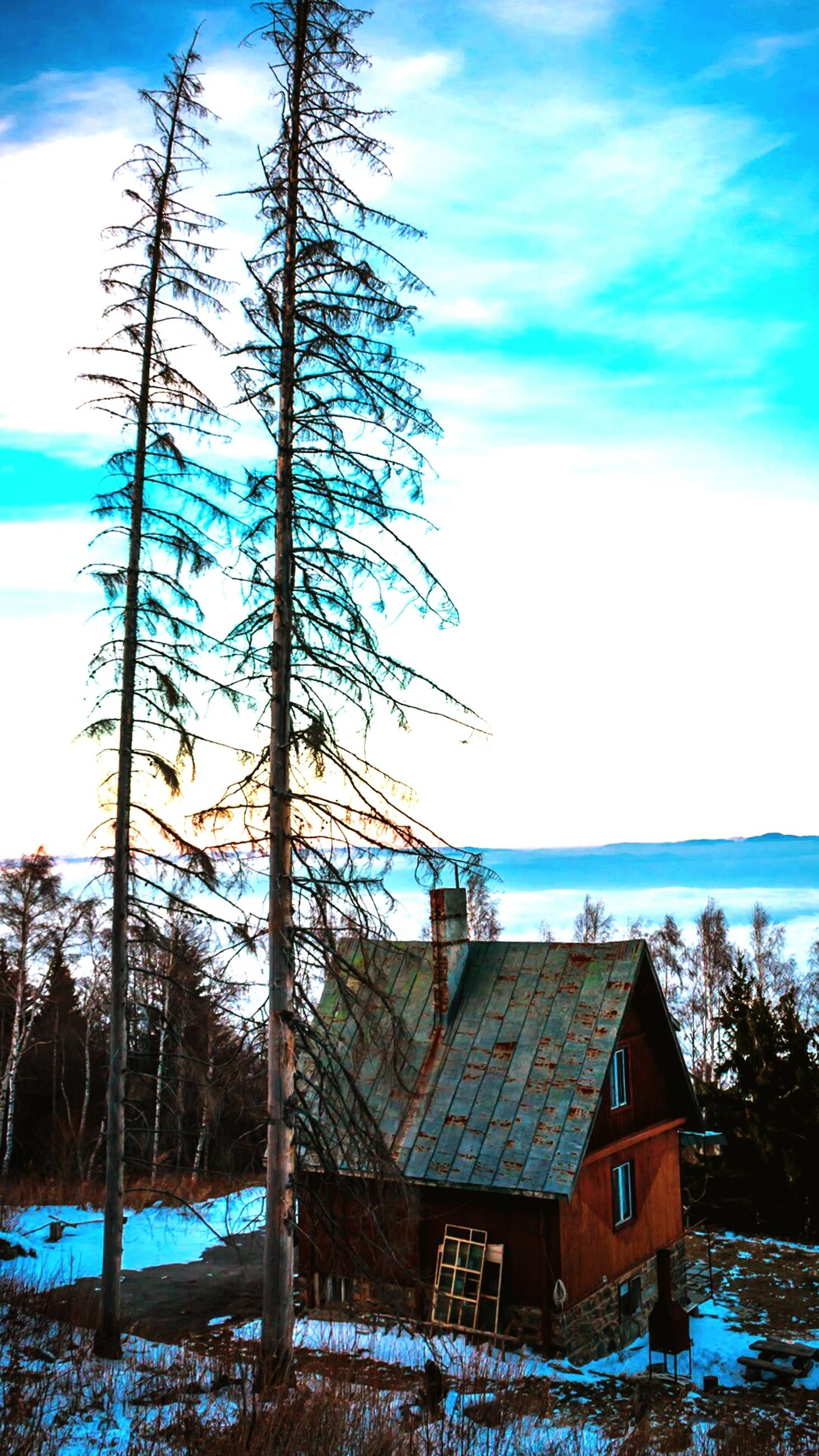 sea, blue, water, sky, tree, bare tree, horizon over water, building exterior, built structure, branch, nature, tranquility, architecture, tranquil scene, scenics, house, beauty in nature, cloud, cloud - sky, day
