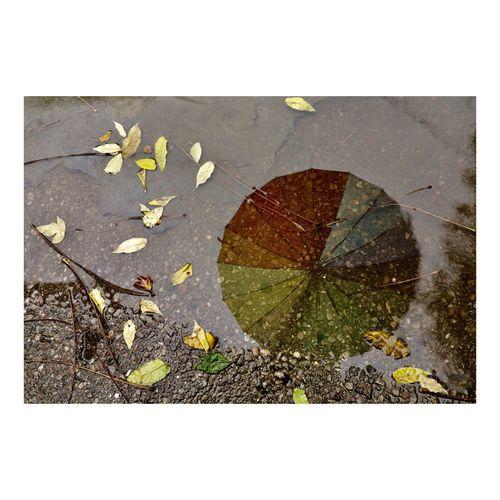 Raining Atumn