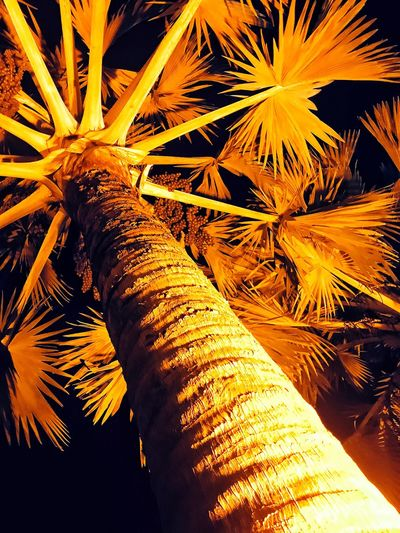 Low Angle View....Palm Tree 🌲 Lighting Effects Low Angle View No People Nature Full Frame Growth Outdoors Plant Backgrounds Day Celebration Water High Angle View Sunlight Tranquility Beauty In Nature Close-up Pattern Tree Sea