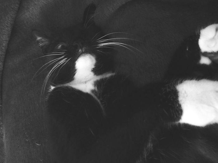 Evie One Eyed Cat Pirate Cat Cats Of EyeEm Cute Cats Sleepy Cat The Portraitist - 2017 EyeEm Awards