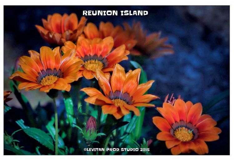Hanging Out Hello World Enjoying Life Reunion Island ST DENIS Nature Flowers