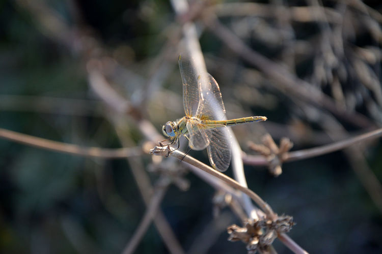High angle view of dragonfly on plant