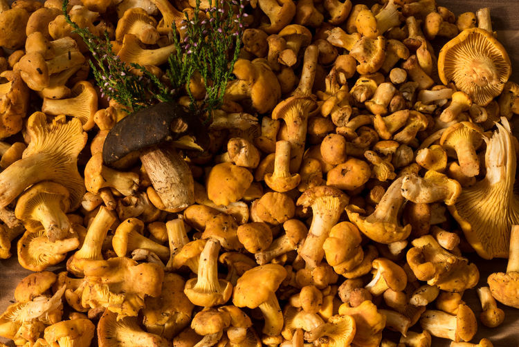 The gold of the forests is our delicacy we find while hiking in the mountains. Namely those are chanterelle mushrooms, delicate, small yellow mushrooms which only grow in the summer month. Austria Bokeh Chanterelle Lutescens Chanterelle Mushrooms Chanterelles Close-up Cooking Delicacy Detail Eierschwammerl Exclusive  Food From The Earth Food From The Forest Food Presentation Foodporn Fungus Golden Macro Mushrooms Nature Pfifferlinge Presenting Food Tyrol Colour Of Life